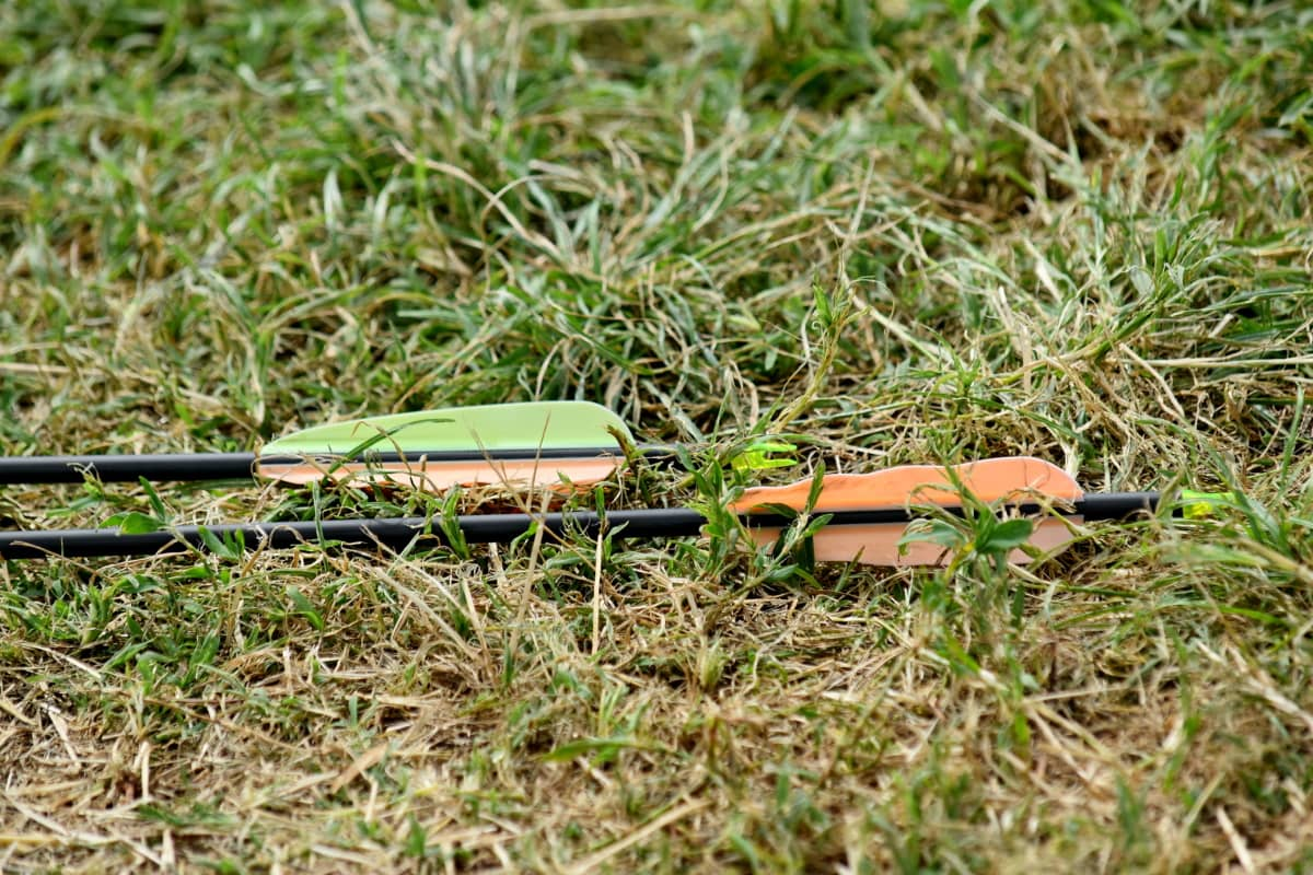 streličarstvo, strijela, trava, priroda, na otvorenom, ljeto, tlo, biljni i životinjski svijet, travnjak, pogled iz blizine