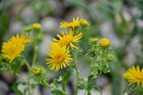 wildflower, yellow green, yellowish, flower, herb, nature, plant, leaf, summer, yellow