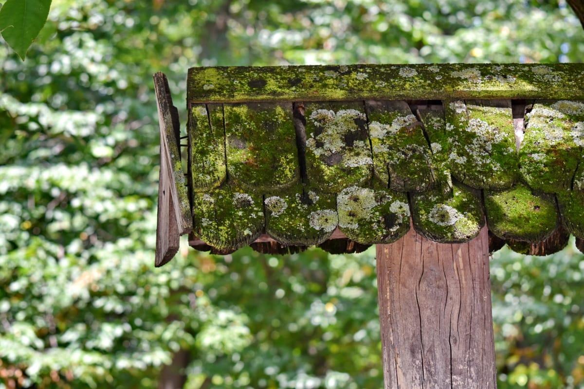 bos, mos, dak, hout, blad, natuur, opknoping, flora, tuin, boom