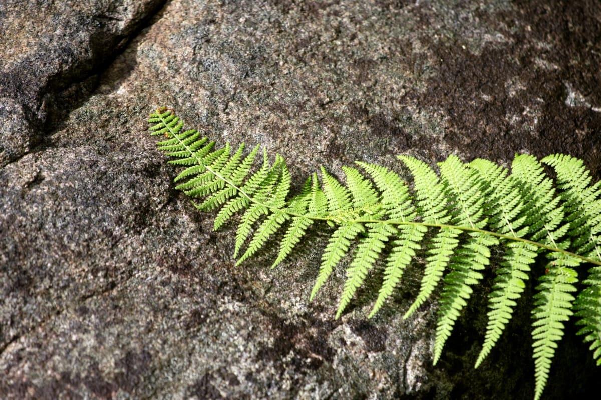 big rocks, lichen, leaf, nature, fern, plant, outdoors, flora, texture, ecology