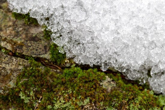 ice, ice crystal, ice field, ice water, lichen, texture, surface, nature, rough, stone