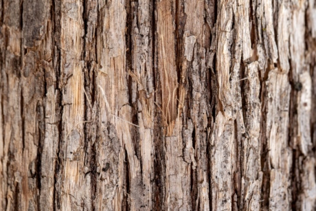 bark, hickory, light brown, timber, rough, wood, old, texture, hardwood, wooden