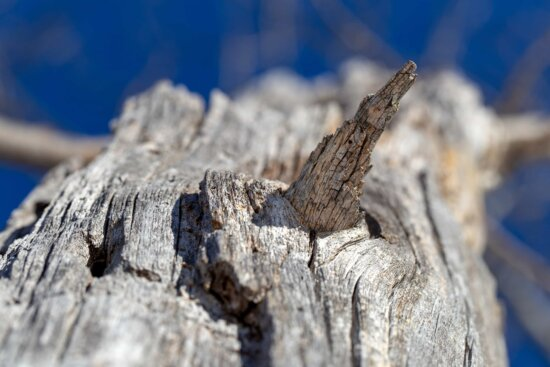 bark, dry, dry season, tree, nature, outdoors, wood, rough, old, landscape