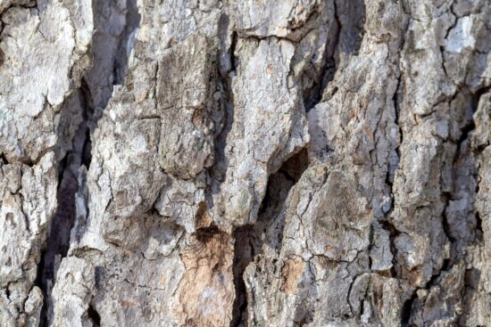 fence, texture, wood, surface, rough, tree, bark, trunk, old, fabric