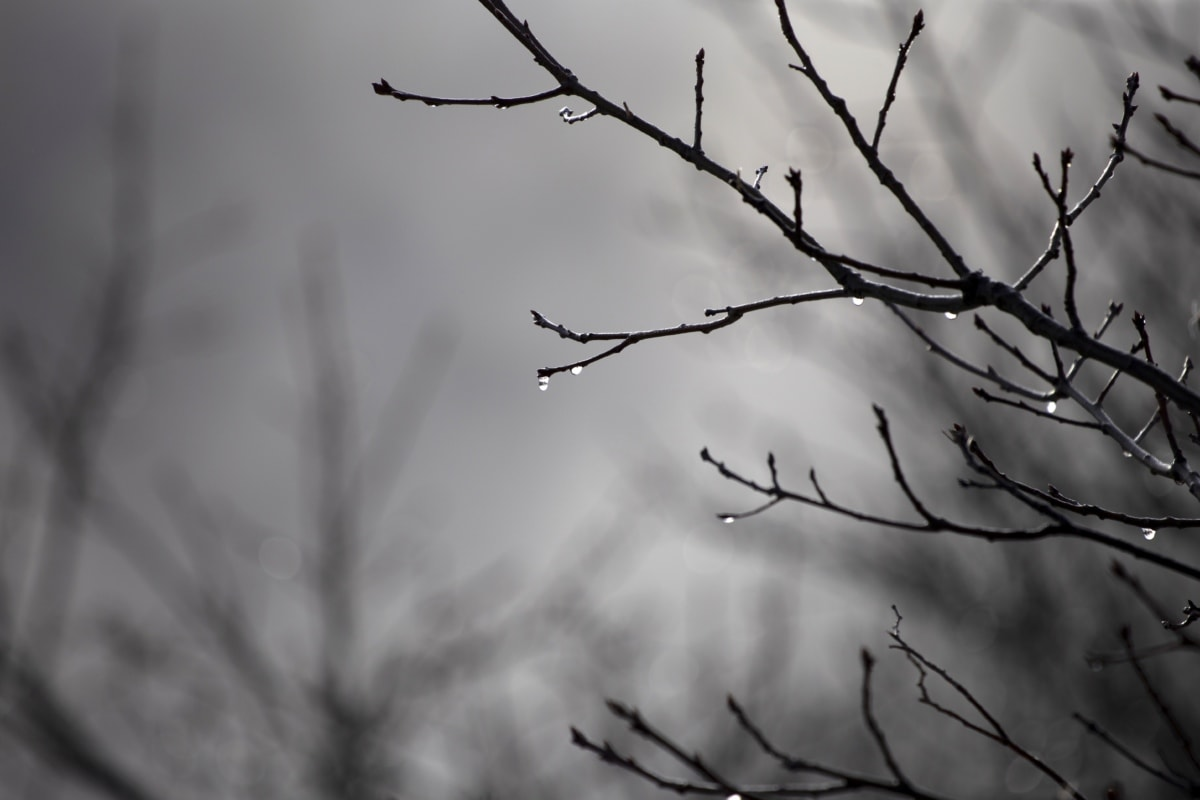 otoño, mal tiempo, ramas, lluvia, Waterdrops, rama, invierno, árbol, naturaleza, monocromo