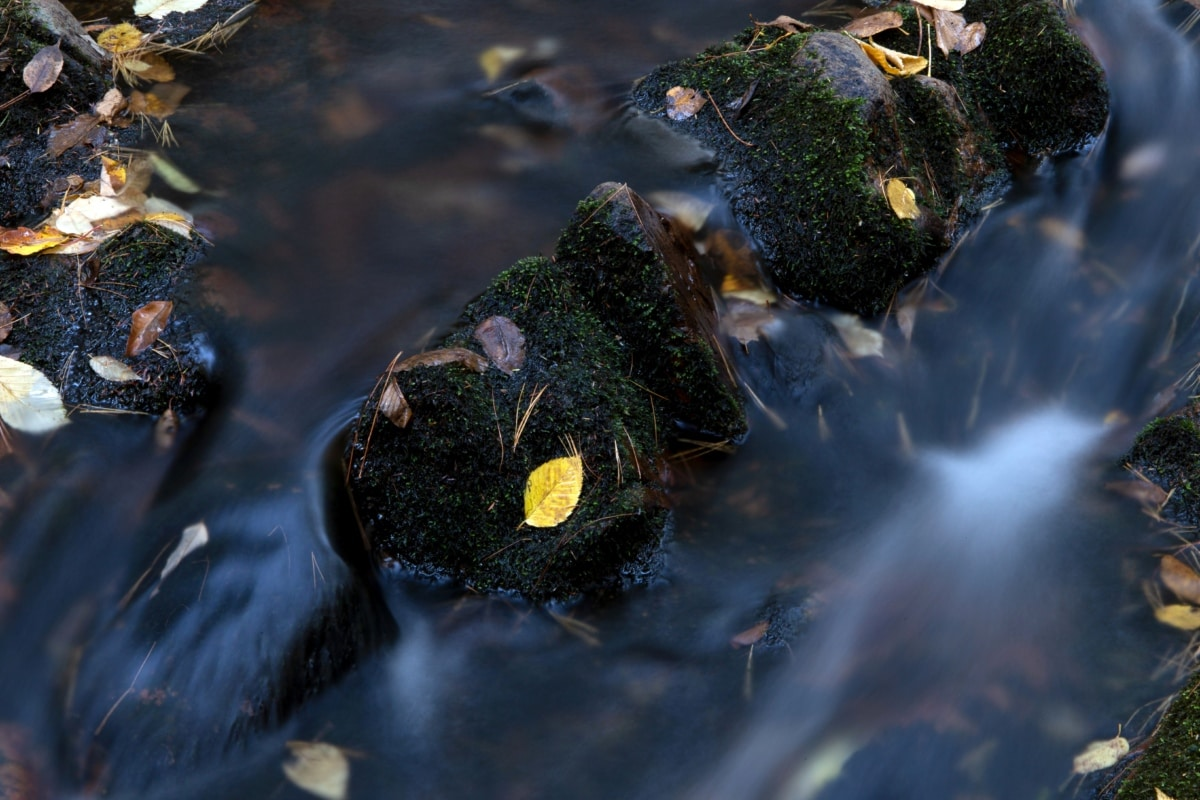 beweging, oever van de rivier, rivierbedding, water, rivier, natuur, kreek, blad, waterval, nat