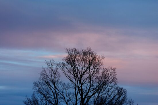 evening, landscape, silhouette, sky glow, trees, tree, sunset, forest, dawn, nature