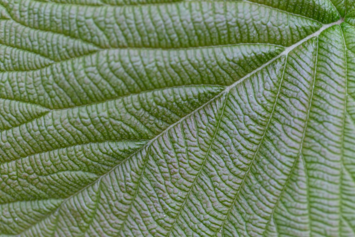 chlorophyll, details, green leaf, organism, vein, leaf, texture, pattern, nature, flora