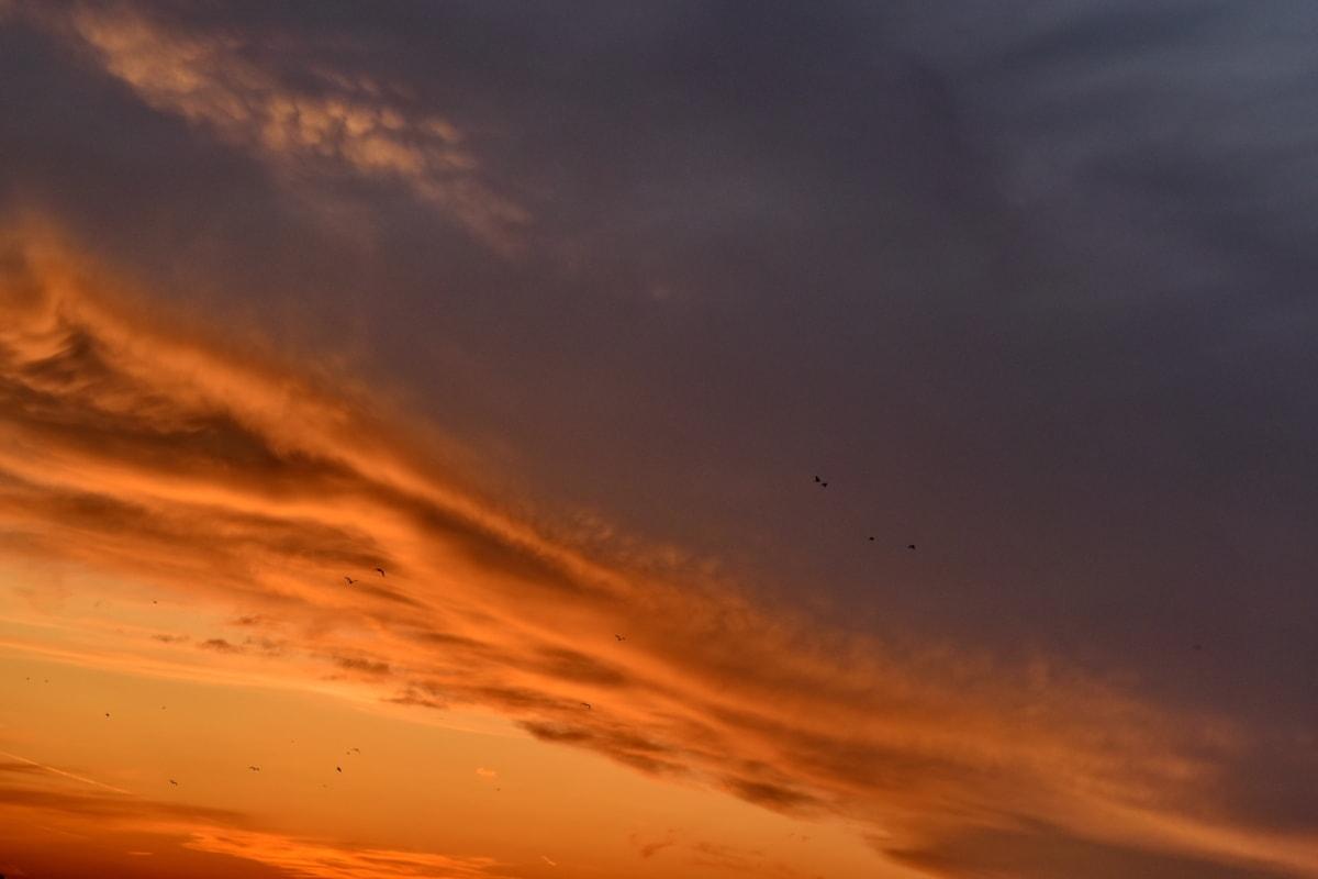 ptaki, Wieczorem, zachód słońca, atmosfera, krajobraz, chmury, Słońce, świt, Zmierzch, Natura
