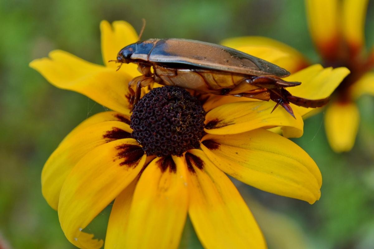 chrobák, Podrobnosti, Záhrada, divoká kvetina, zviera, krásne kvety, biológia, kvet, kvitnúce, kvet