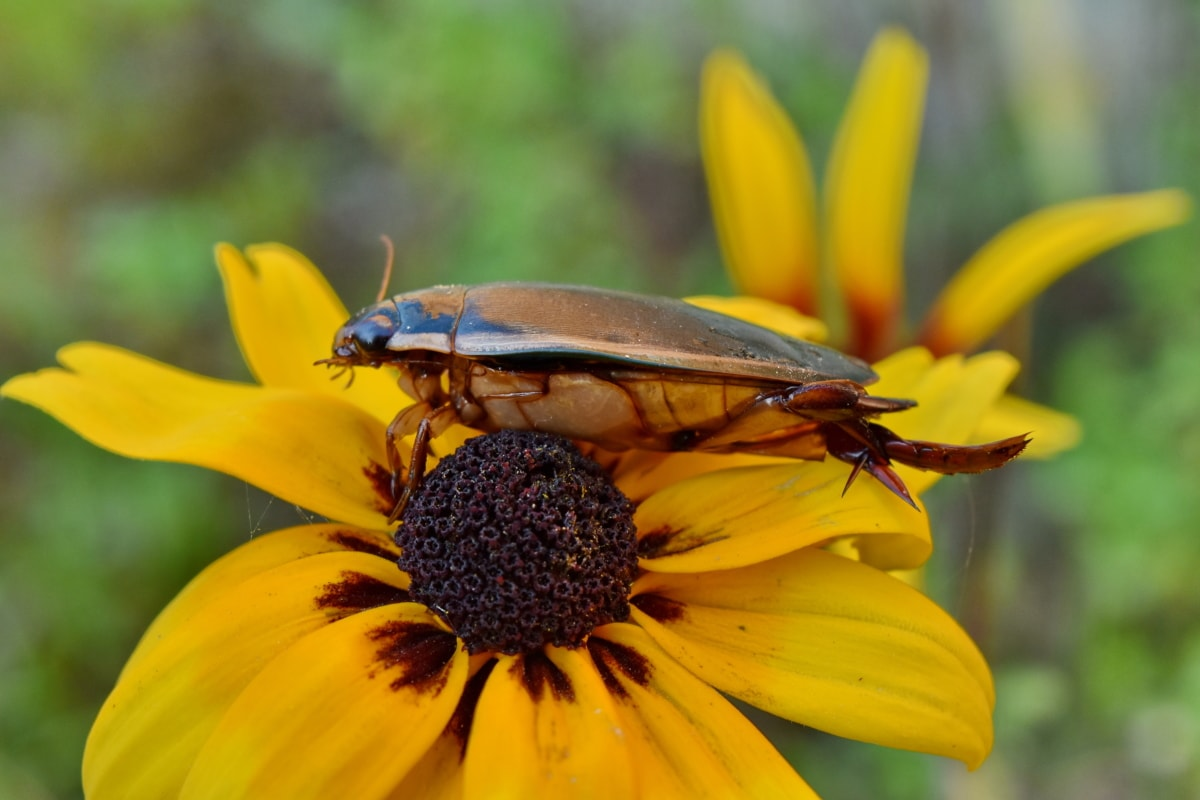 beautiful image, beetle, detail, pistil, animal, arthropod, beautiful flowers, biology, bloom, blooming