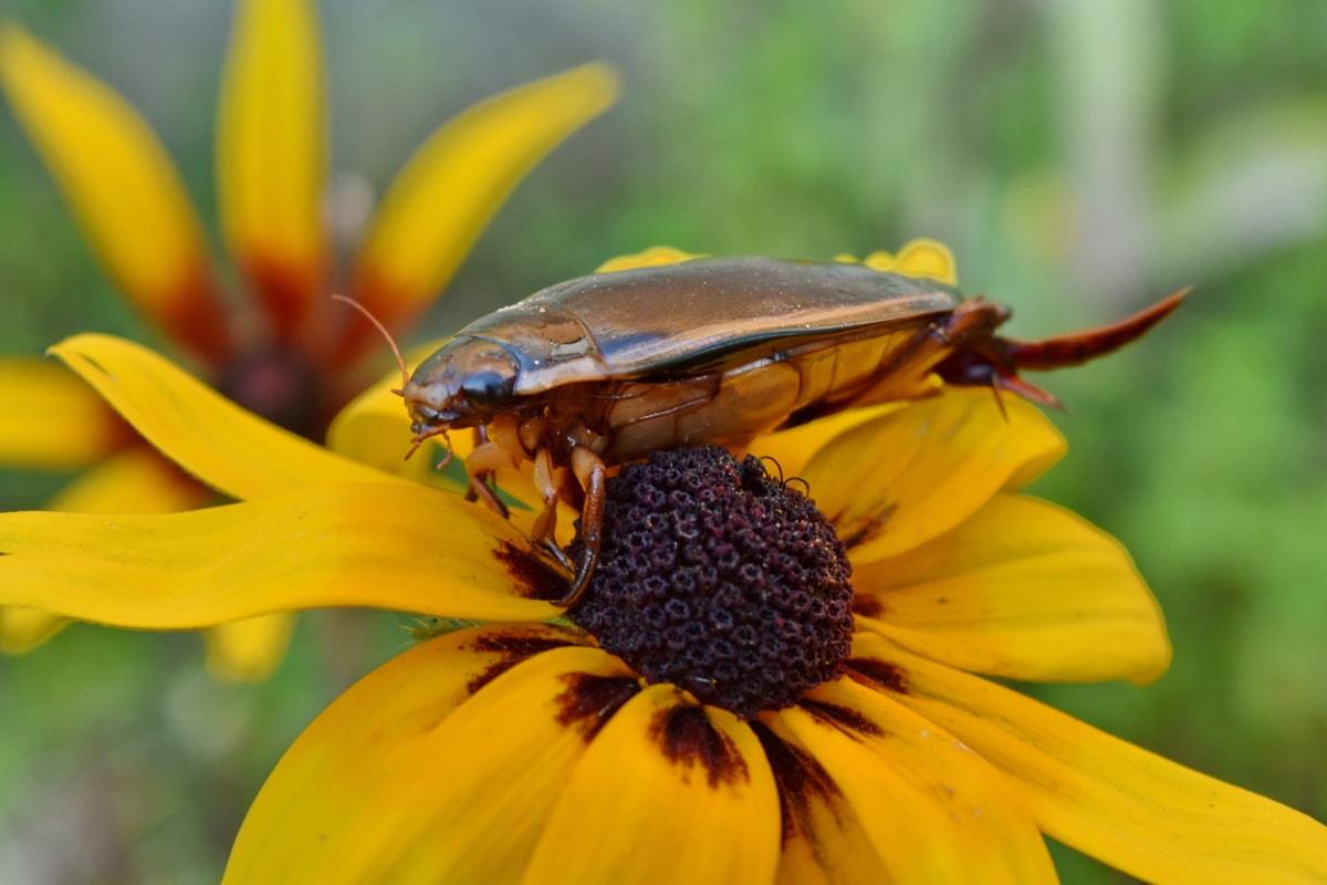 カブトムシ, 間近, head, 昆虫, 動物, 節足動物, 美しい花, 生物学, ブルーム, 咲く