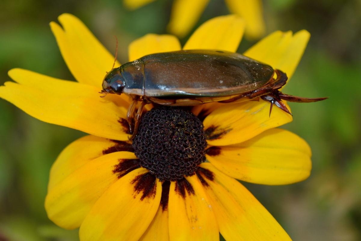 животните, членестоноги, красиви цветя, бръмбар, биология, разцвет, цъфтят, цвят, ботаника, бъг