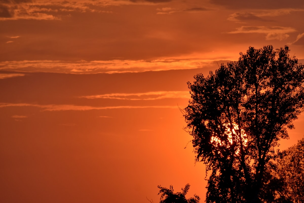 silhouette, Sun glow, sunrise, trees, sunset, sun, star, dawn, evening, dusk