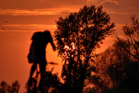 bicycle, shadow, silhouette, sunset, trees, dawn, tree, sun, star, backlight