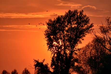 birds, evening, silhouette, sun, sunset, tree, star, dawn, landscape, dusk