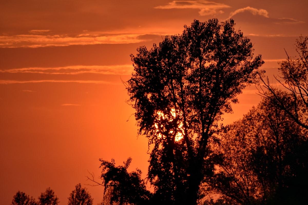 piękne zdjęcie, sylwetka, sezon letni, zachód słońca, drzewa, krajobraz, świt, gwiazda, Słońce, drzewo