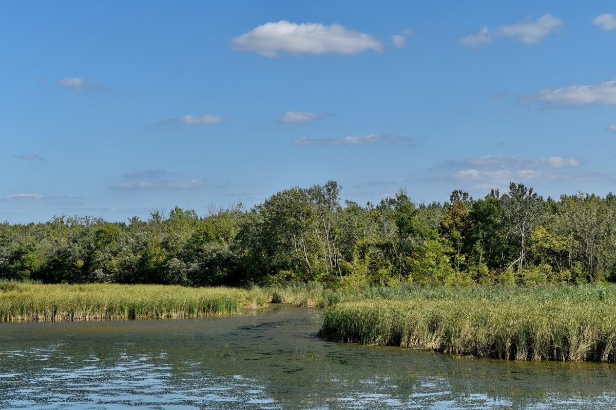 marshlands, natural habitat, swamp, water, landscape, nature, lake, tree, forest, channel