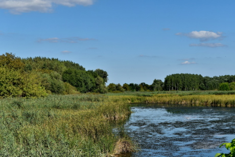 blue sky, panorama, swamp, forest, nature, grass, land, lake, landscape, tree