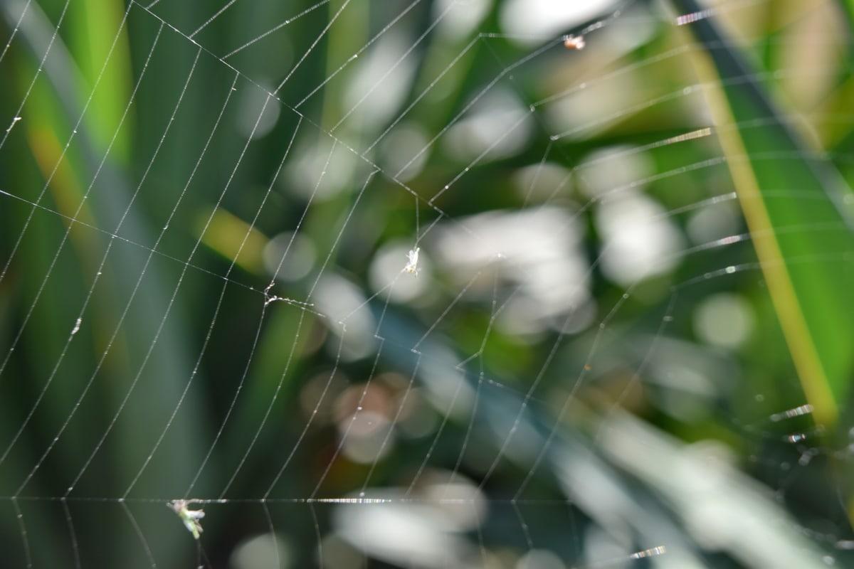 cobweb, blur, trap, spider web, spider, spiderweb, abstract, nature, texture, pattern