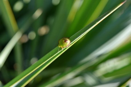 beetle, detail, insect, small, garden, leaf, plant, grass, nature, blade