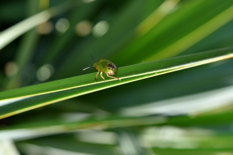 beetle, green, arthropod, nature, leaf, garden, insect, flora, color, grass