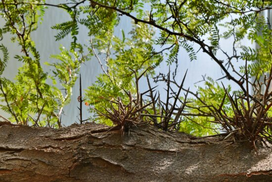 spike, thorn, nature, landscape, plant, wood, tree, forest, leaf, outdoors