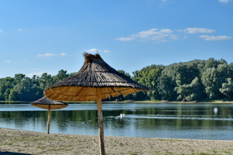 beach, sand, summer time, swan, summer, water, resort, nature, tree, umbrella