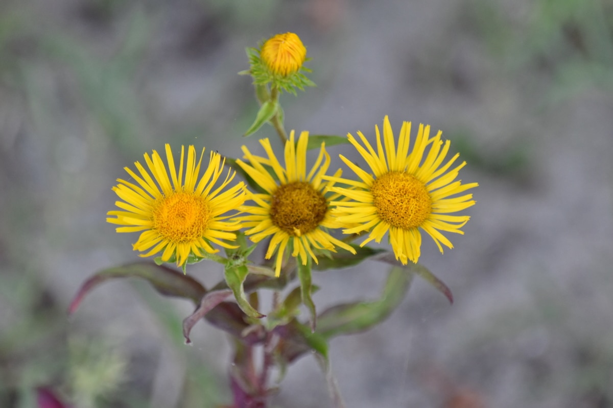 flower, flora, herb, plant, yellow, summer, nature, leaf, pollen, outdoors