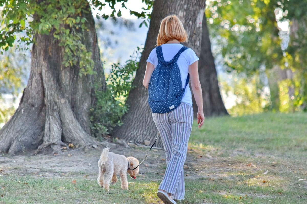 pes, potešenie, Príroda, žena, príroda, park, tráva, vonku, letné, strom
