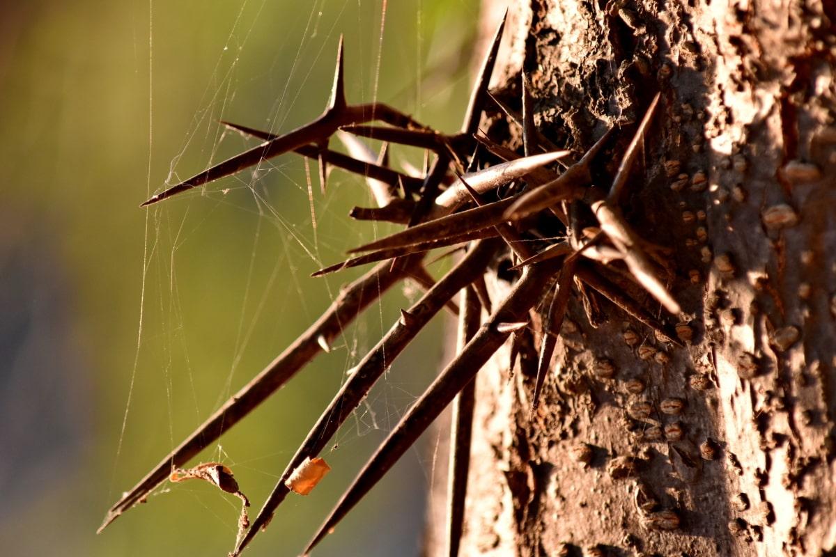Détails, tranchant, toile d'araignée, épine, arbre, nature, fermer, invertébré, feuille, animal