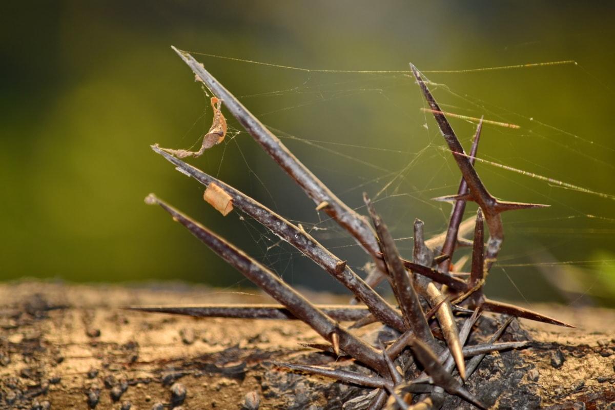 detail, spider web, thorn, nature, outdoors, leaf, upclose, sharp, color, flora