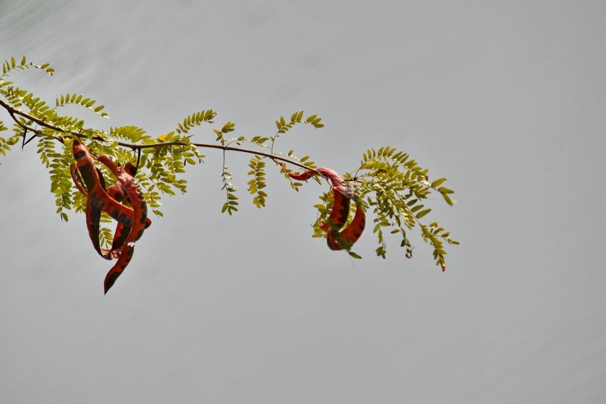 treet, anlegget, blad, natur, hengende, farge, Sommer, utendørs, gren, flora
