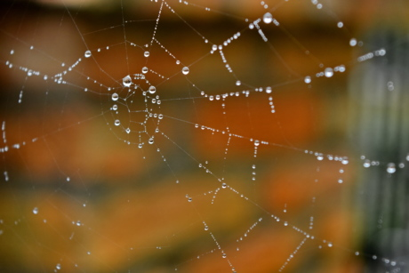 moisture, raindrop, transparent, trap, spider web, spiderweb, dew, cobweb, shining, design