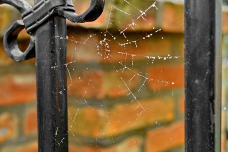 trap, cobweb, spider web, iron, nature, steel, rain, wet, danger, old