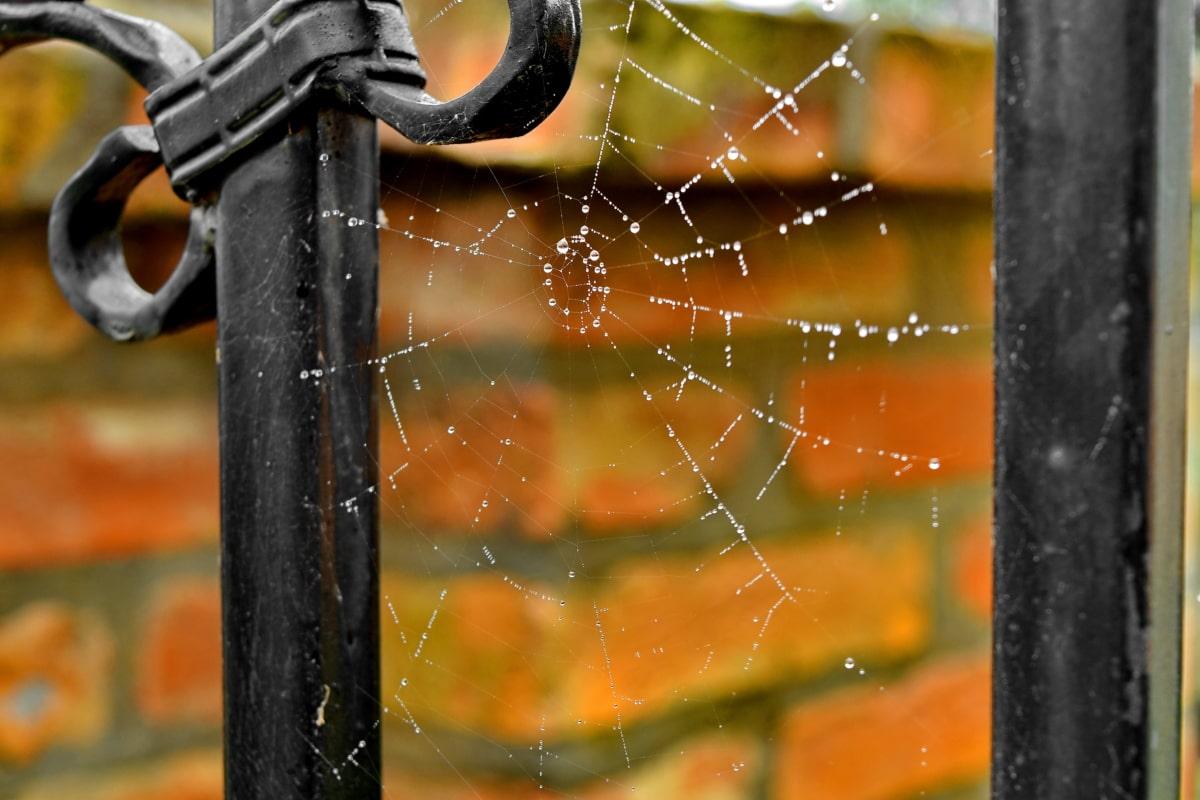 besi cor, jaring laba-laba, embun, pagar, kelembaban, titisan hujan, jaring laba-laba, perangkap, besi, alam