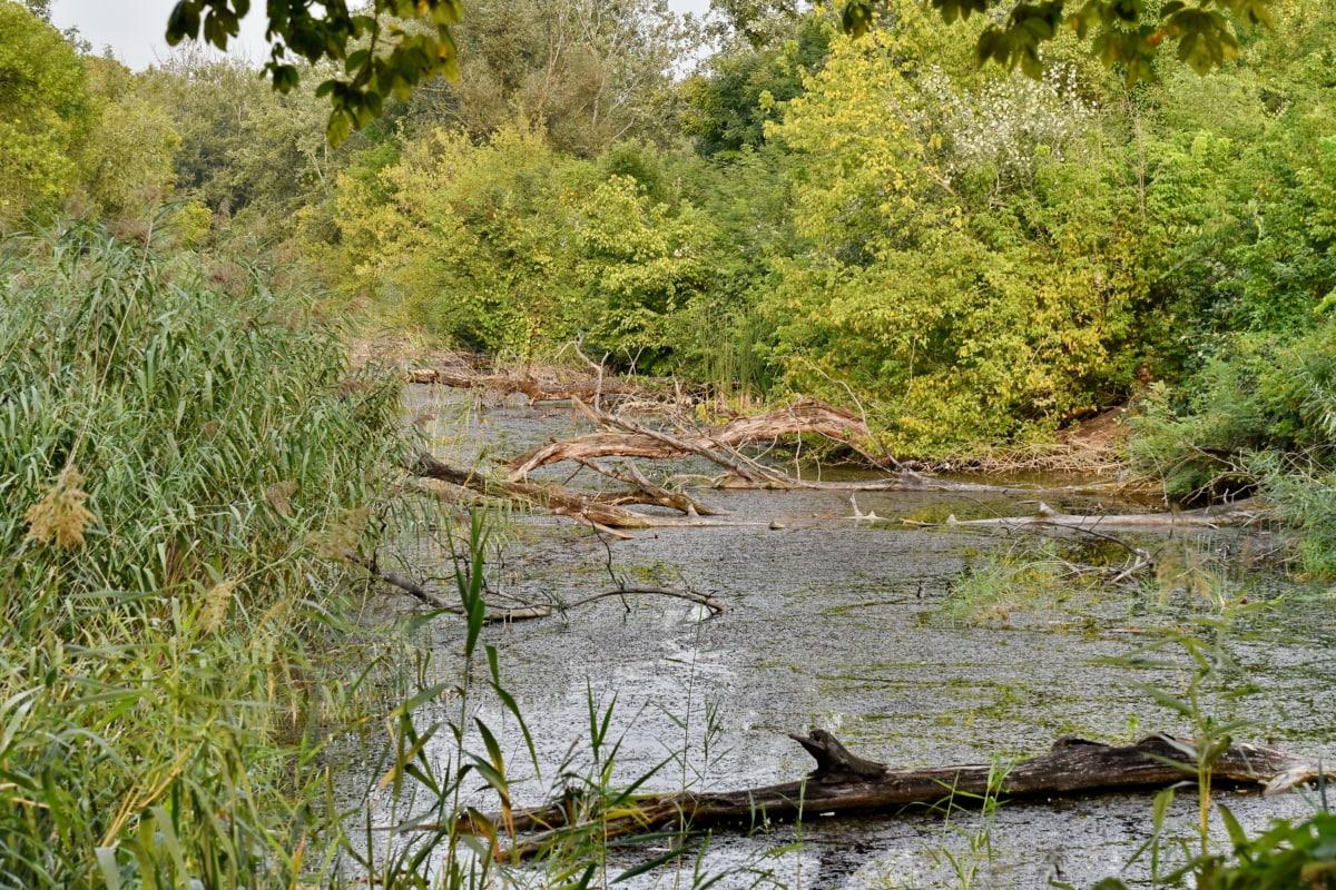 močiare, panoráma, jarný čas, močiar, voda, mokraď, les, Príroda, príroda, strom