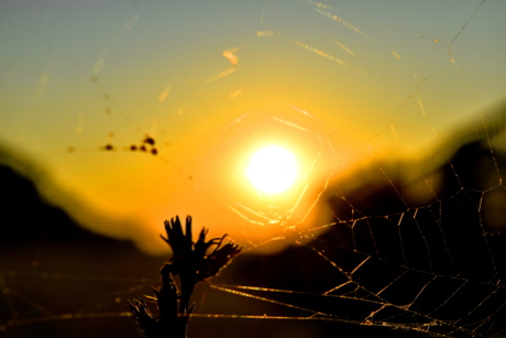evening, landscape, spider web, sunset, star, sun, nature, spider, abstract, fair weather