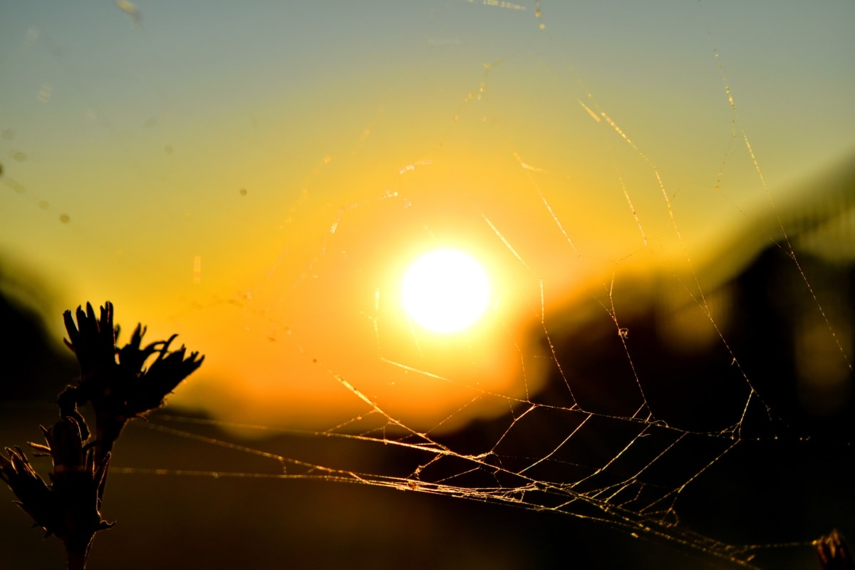 summer time, sunset, spider web, trap, sun, nature, spiderweb, silhouette, fair weather, landscape