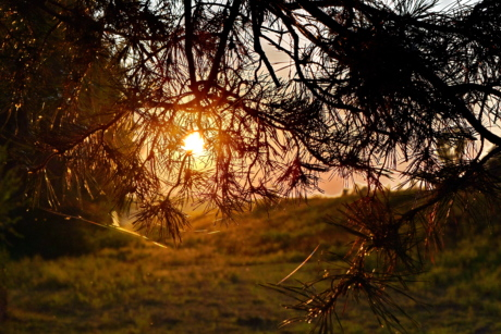 backlight, branch, conifers, landscape, sunrays, sunset, lighting, sun, tree, forest