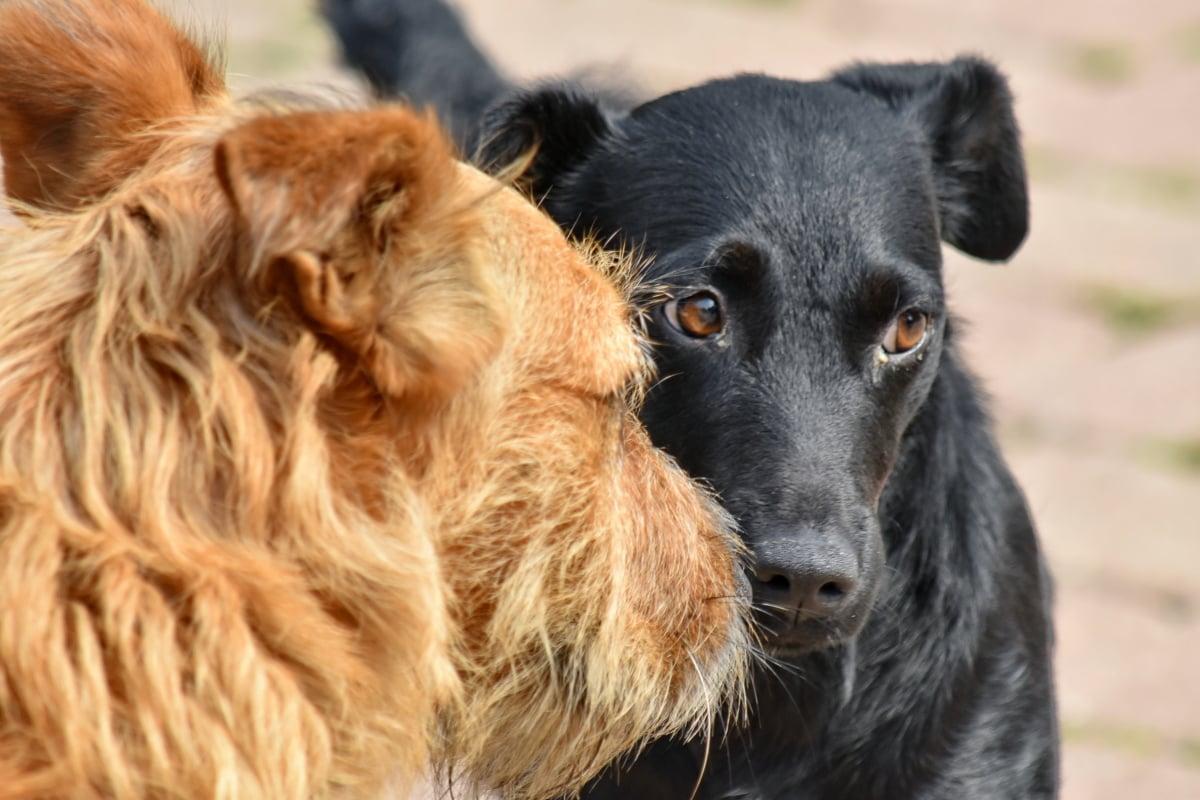dogs, friendship, portrait, pet, dog, cute, fur, eye, hair, hairy