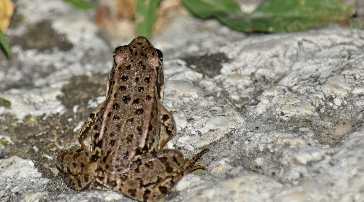 kamuflaža, žaba, vodozemac, priroda, biljni i životinjski svijet, životinja, na otvorenom, mokro, pogled iz blizine, gmaz