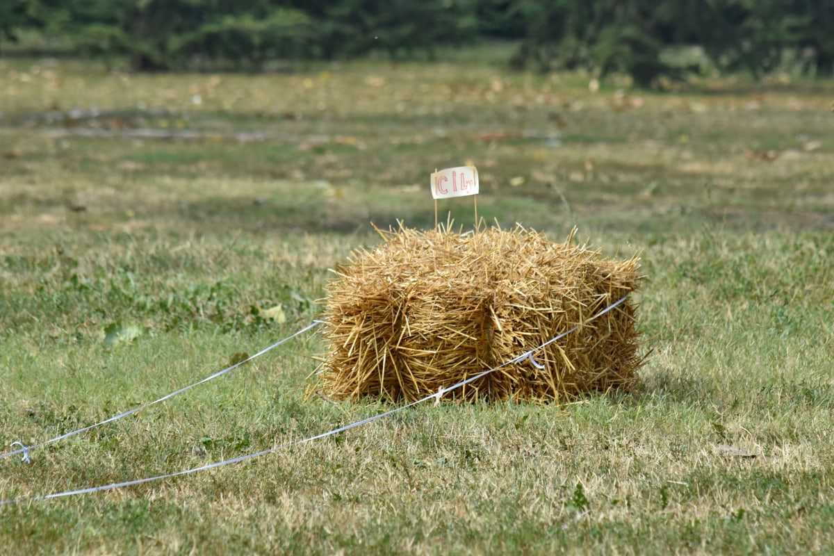 hay, hay field, grass, nature, field, farm, straw, agriculture, landscape, summer