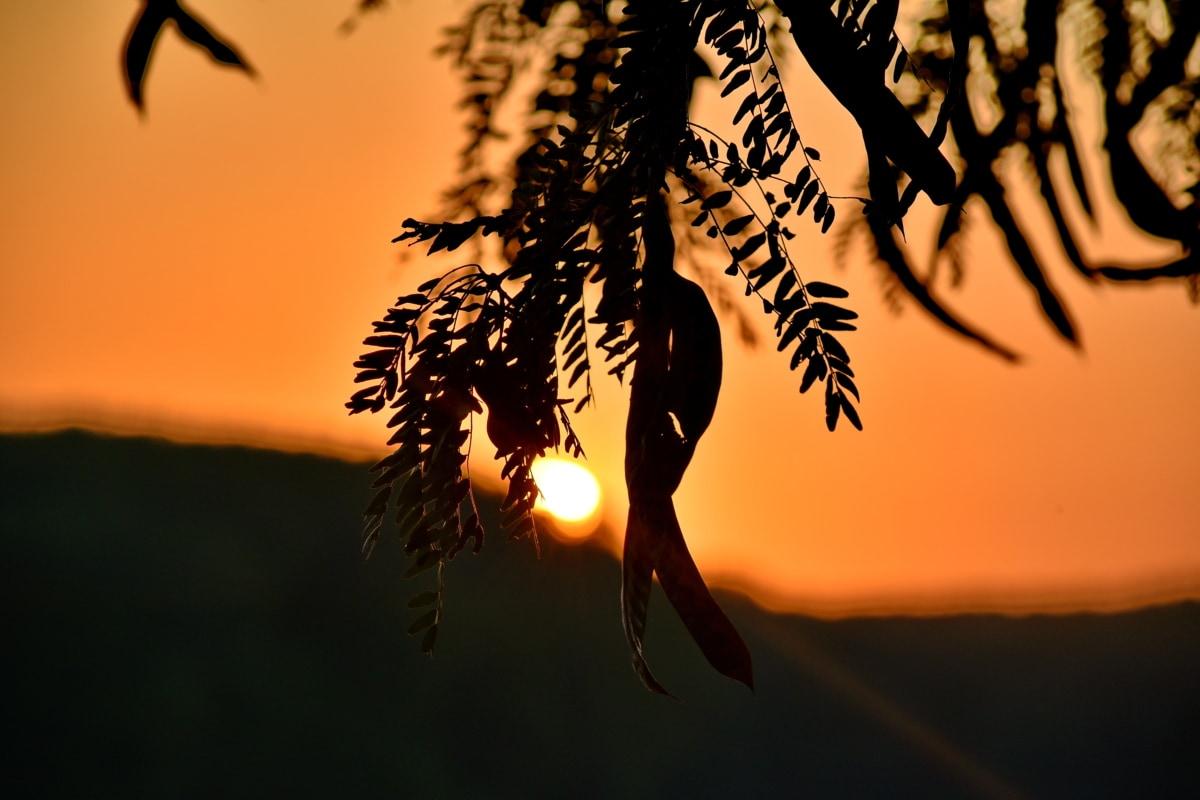 pozadinsko svijetlo, sjena, silueta, suncevi zraci, izlazak sunca, Sunce, zalazak sunca, zvijezda, drvo, priroda