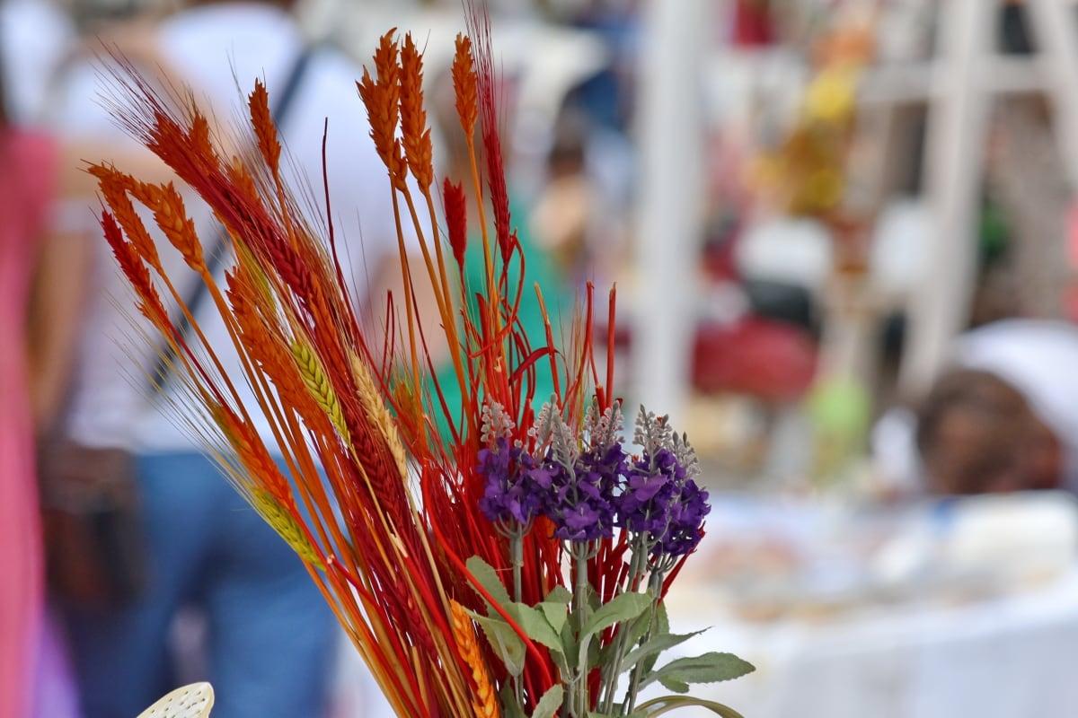 барвистий, прикраса, сухі, фарба, Натюрморт, квітка, завод, на відкритому повітрі, природа, фестиваль
