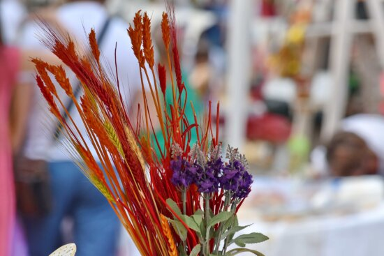 colorful, decoration, dry, paint, still life, flower, plant, outdoors, nature, festival