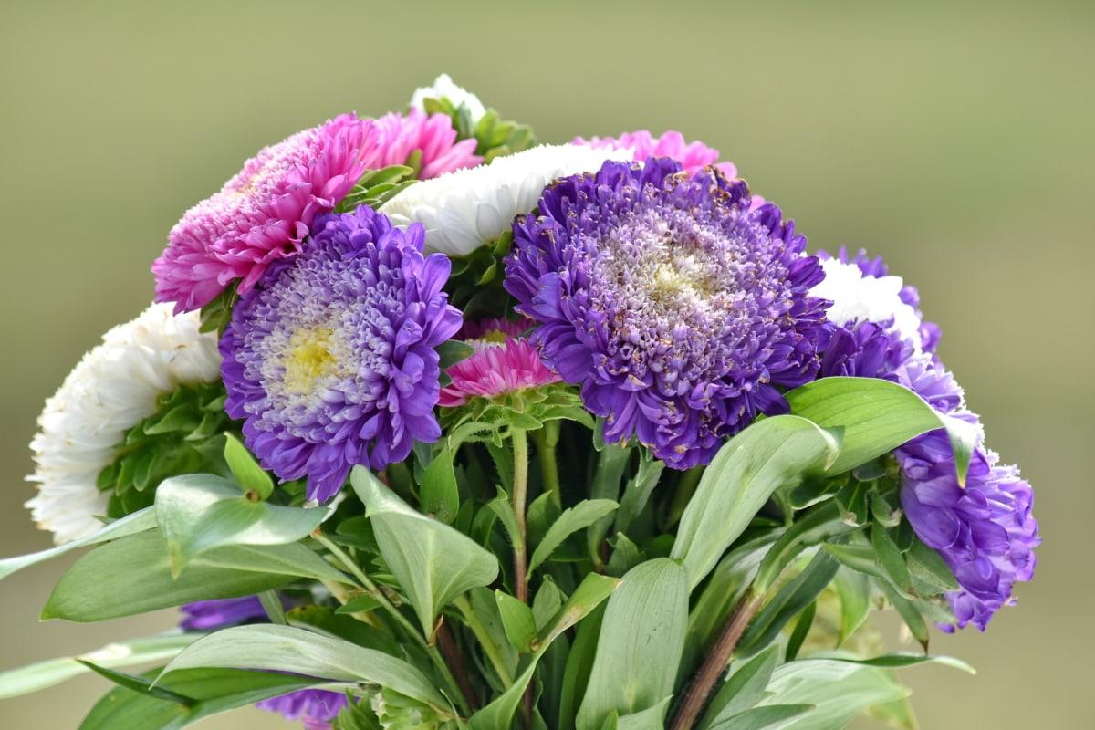 arreglo, ramo de la, flor, naturaleza, hoja, verano, Color, púrpura, brillante, de cerca