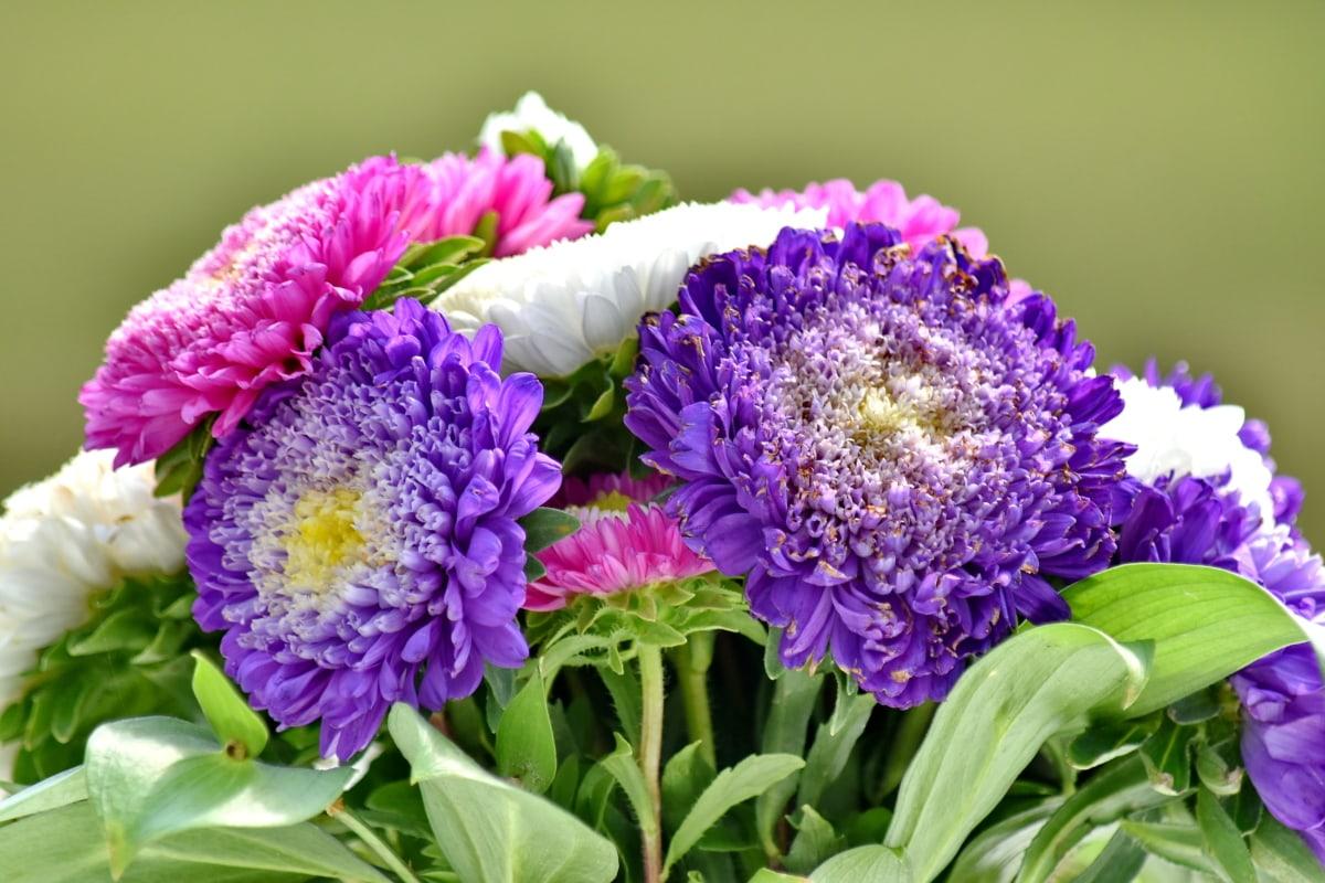 buket, cvijet, ljeto, flora, priroda, list, vrt, svijetle, latica, ljubičasta