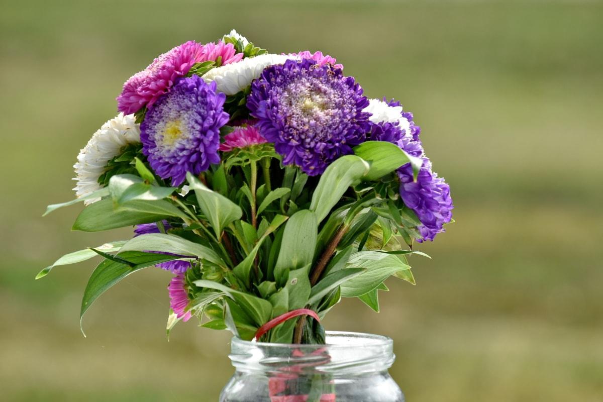 staklenku, vaza, aranžman, buket, priroda, cvijet, cvijeće, ljeto, flora, list