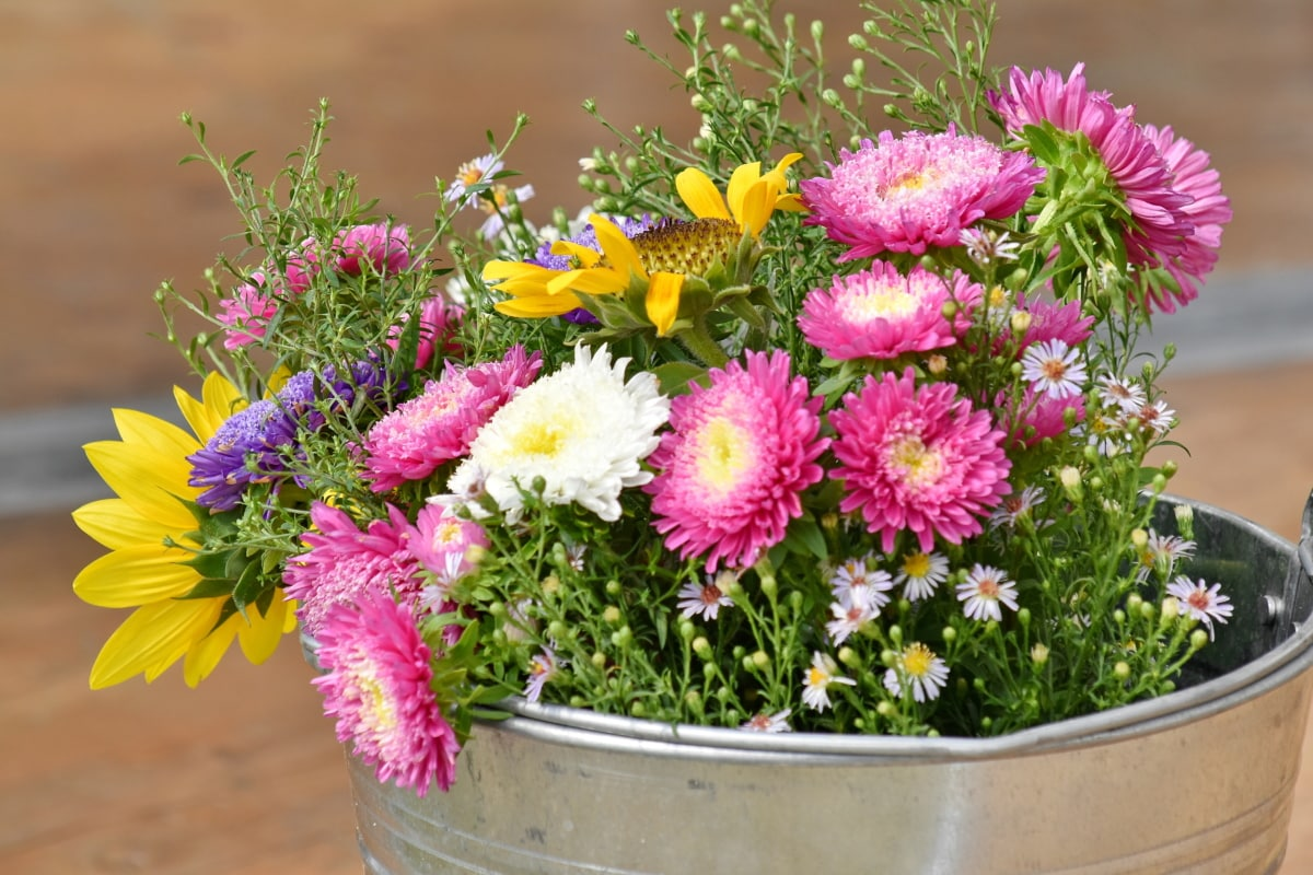 arreglo, cubo, decoración, naturaleza muerta, vendimia, flores, verano, flor, ramo de la, florece